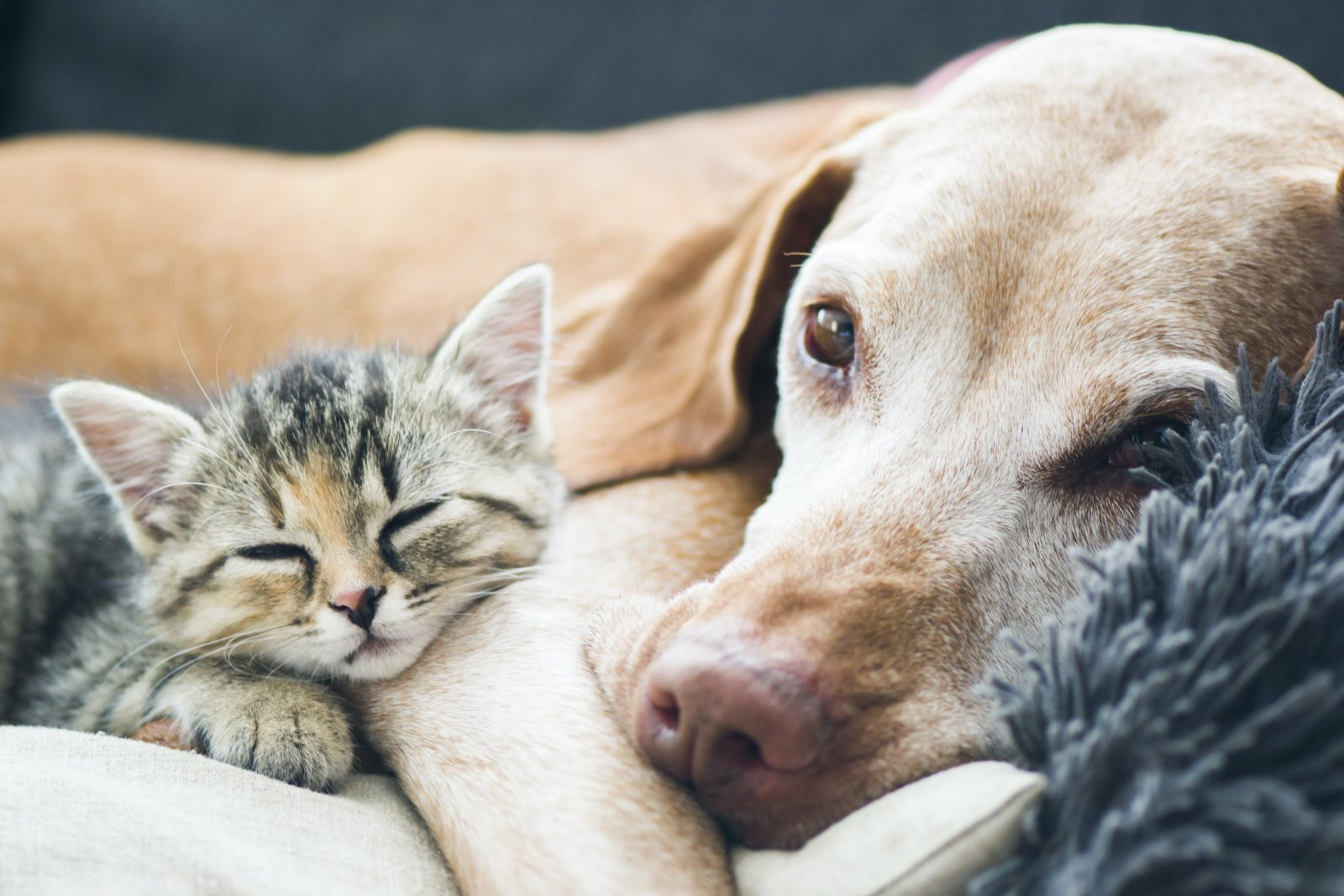 Pet research: 18 new insights about your furry friends.