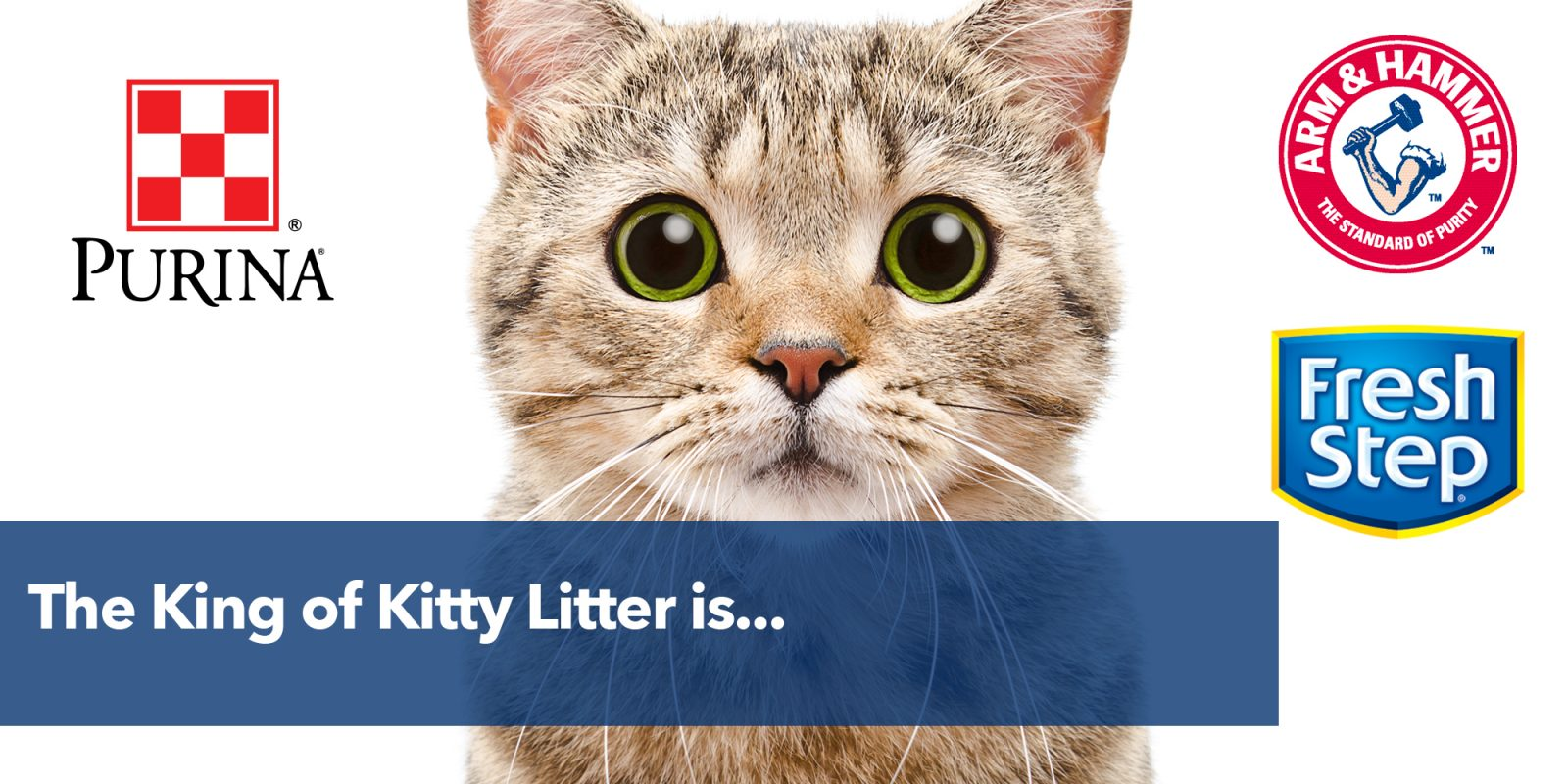The King of Kitty Litter is…